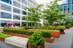 Commercial Landscape Management