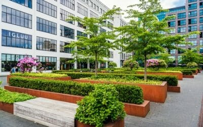 Commercial Landscape Management: Four Things You Need To Know